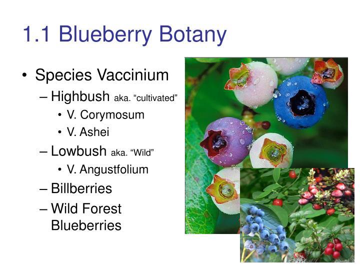 1.1 Blueberry Botany