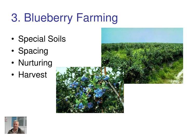 3. Blueberry Farming