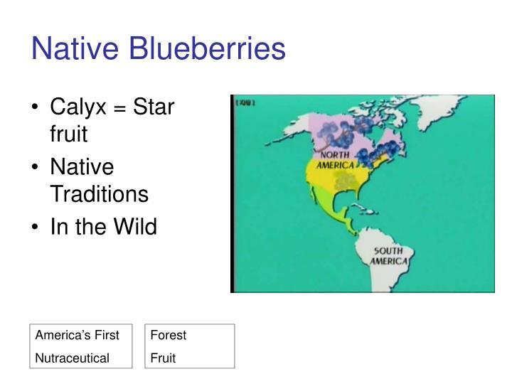 Native Blueberries