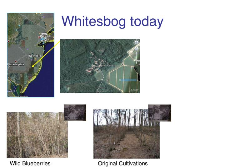 Whitesbog today