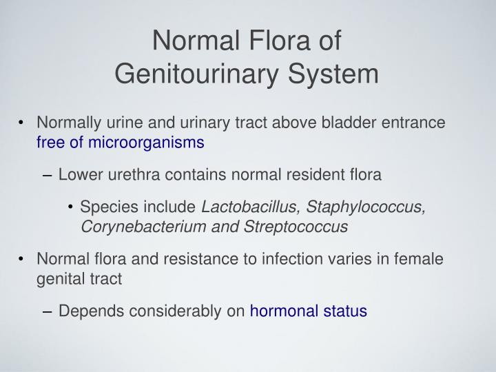 Normal flora of genitourinary system