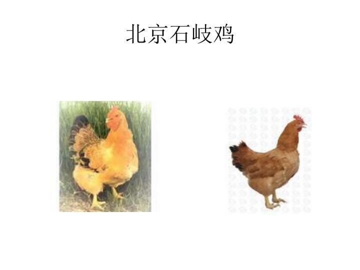 北京石岐鸡