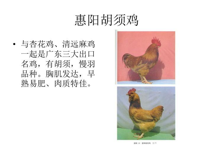惠阳胡须鸡