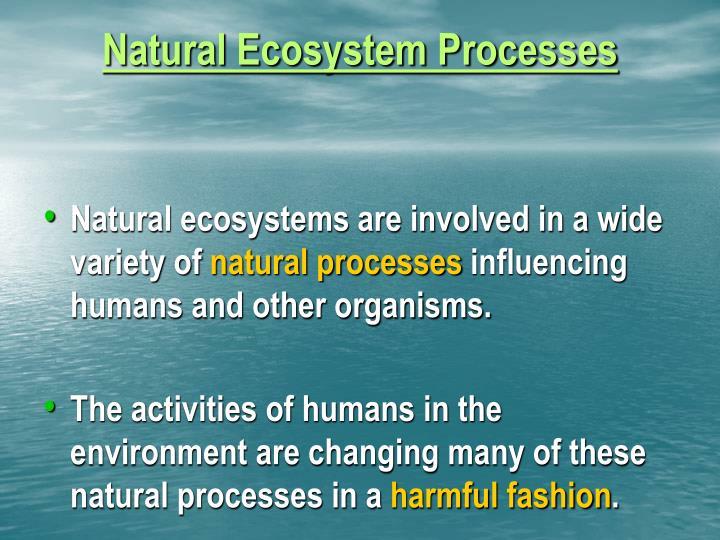 Natural Ecosystem Processes
