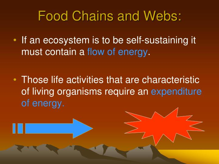Food Chains and Webs: