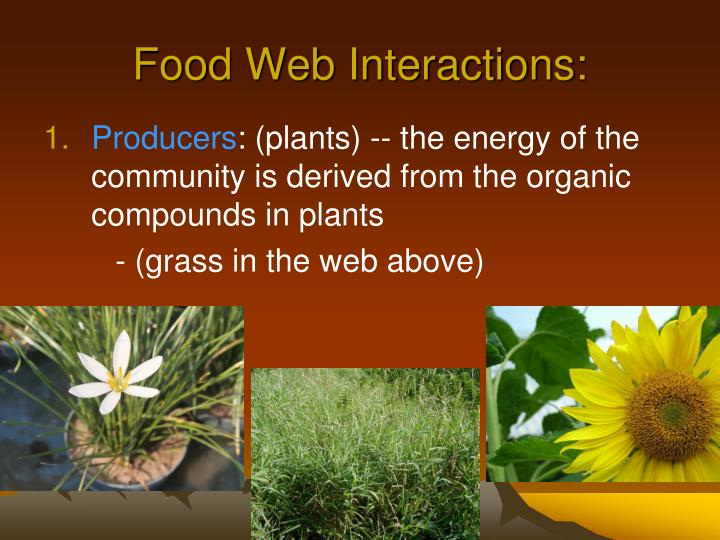 Food Web Interactions: