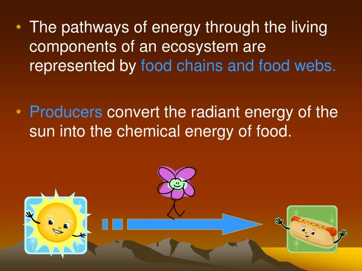 The pathways of energy through the living components of an ecosystem are represented by