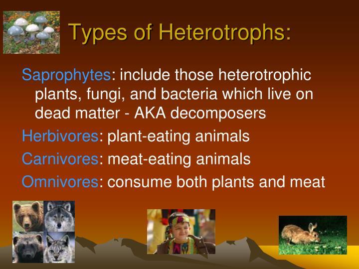 Types of Heterotrophs: