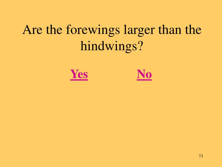 Are the forewings larger than the hindwings?