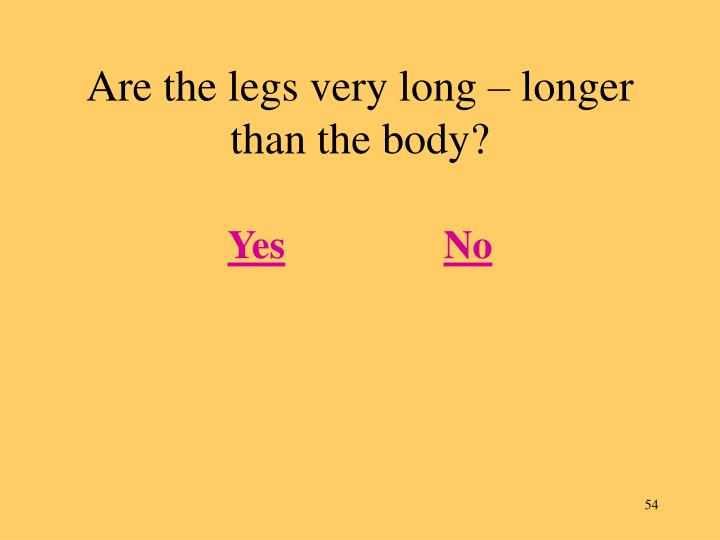 Are the legs very long – longer than the body?