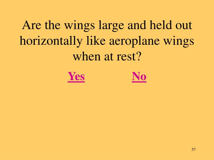 Are the wings large and held out horizontally like aeroplane wings when at rest?