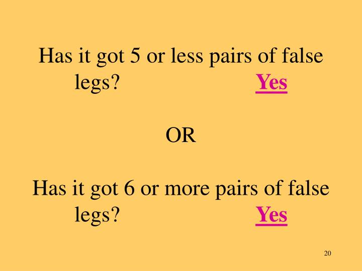 Has it got 5 or less pairs of false legs?