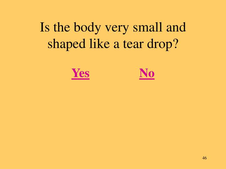Is the body very small and shaped like a tear drop?