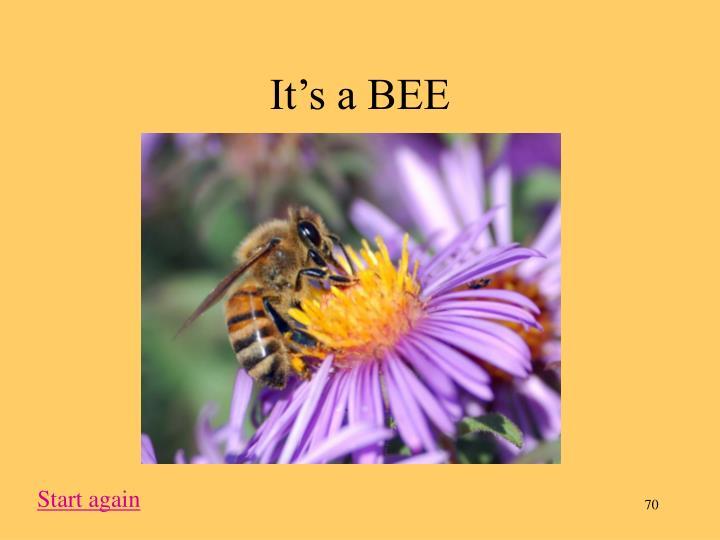 It's a BEE