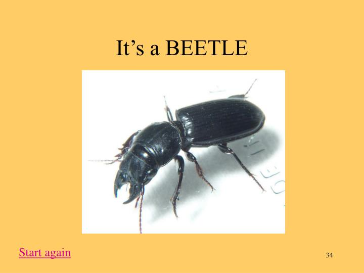 It's a BEETLE