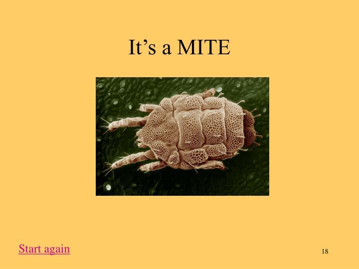 It's a MITE