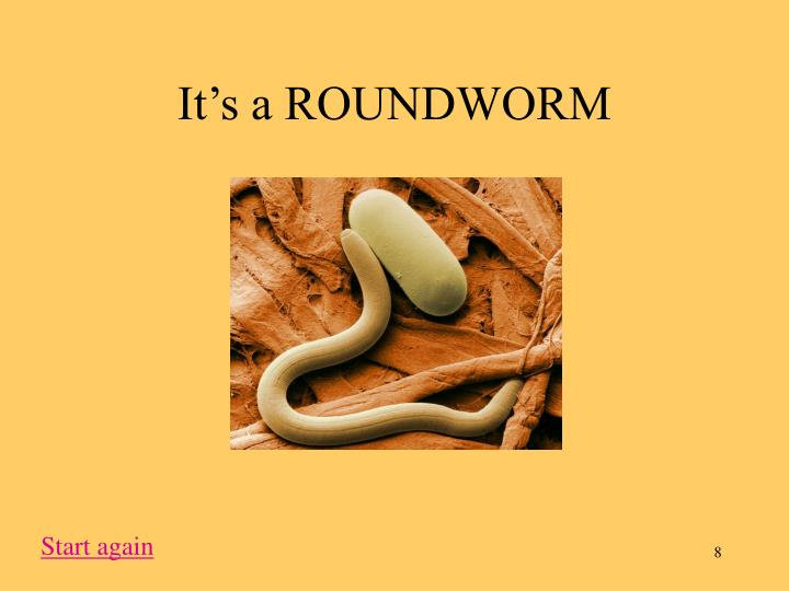 It's a ROUNDWORM
