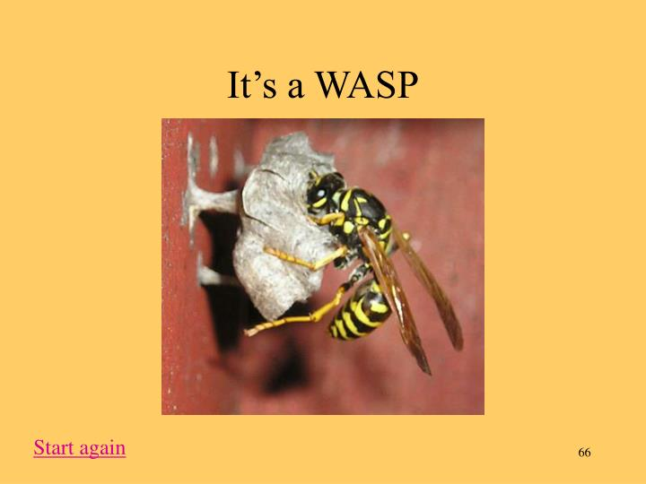 It's a WASP