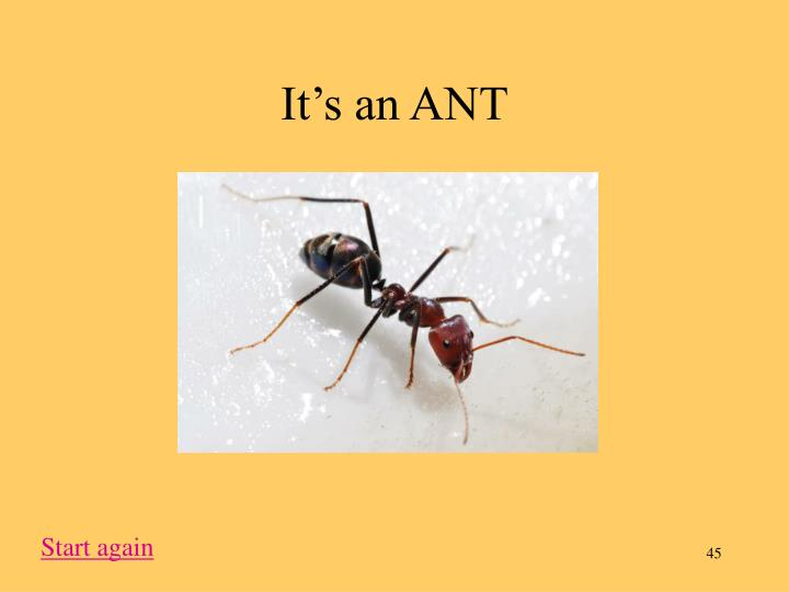 It's an ANT