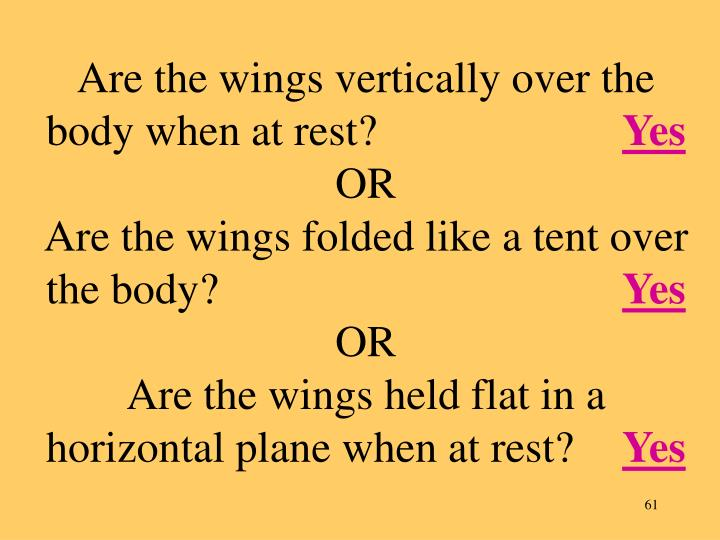 Are the wings vertically over the body when at rest?
