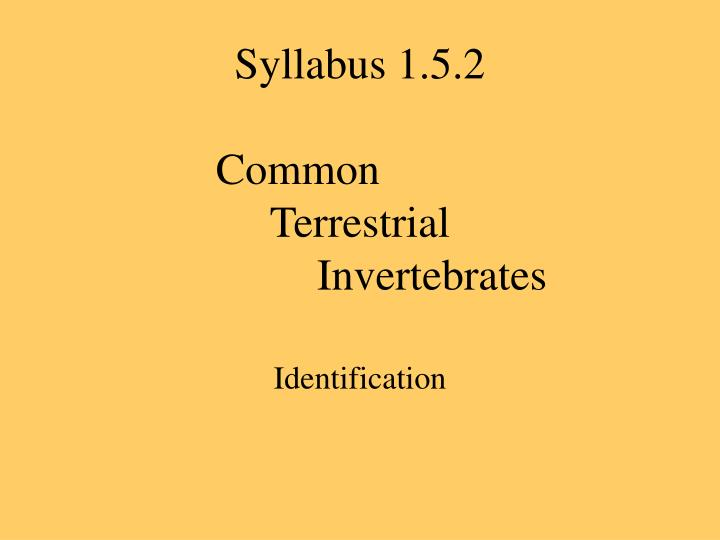 Syllabus 1 5 2 common terrestrial invertebrates