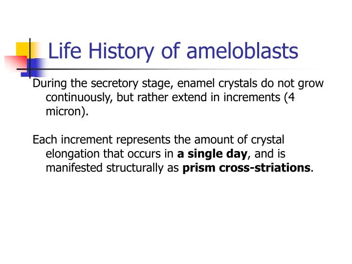 Life History of ameloblasts