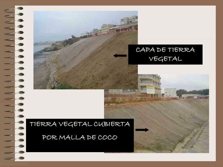 CAPA DE TIERRA VEGETAL