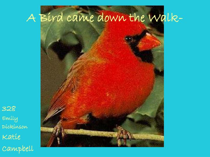 A Bird came down the Walk-