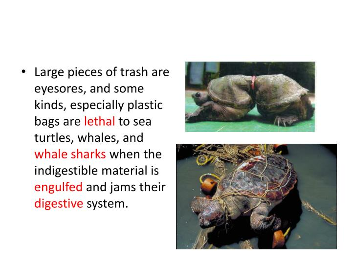 Large pieces of trash are eyesores, and some kinds, especially plastic bags are