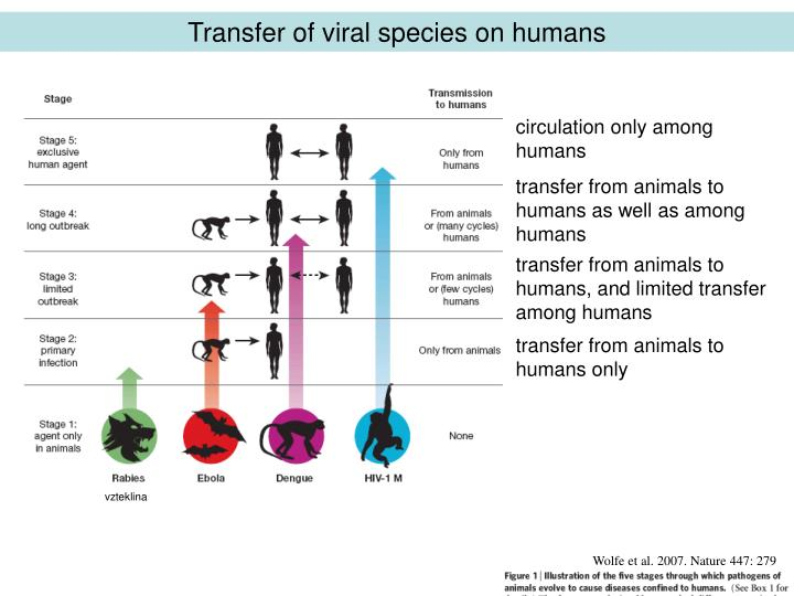 Transfer of viral species on humans