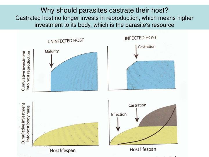 Why should parasites castrate their host