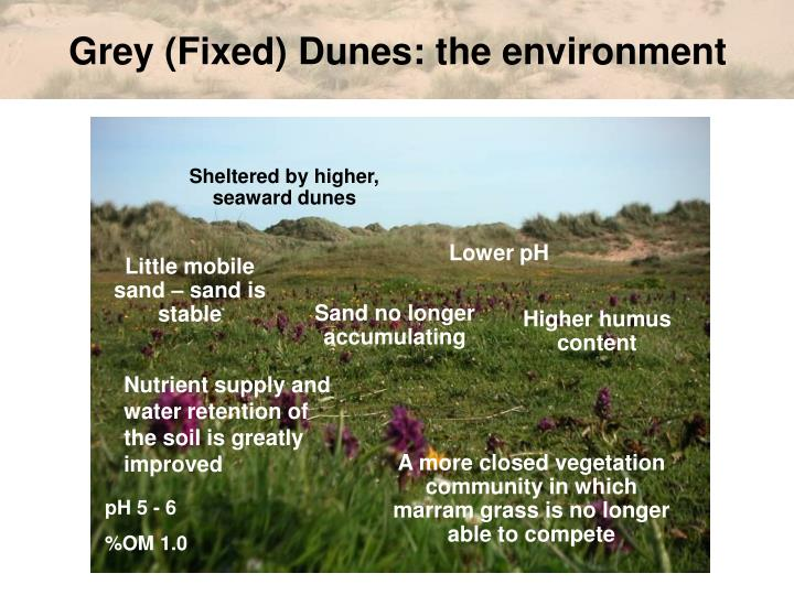Grey (Fixed) Dunes: the environment