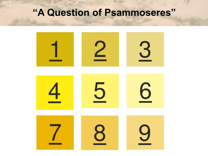 """A Question of Psammoseres"""