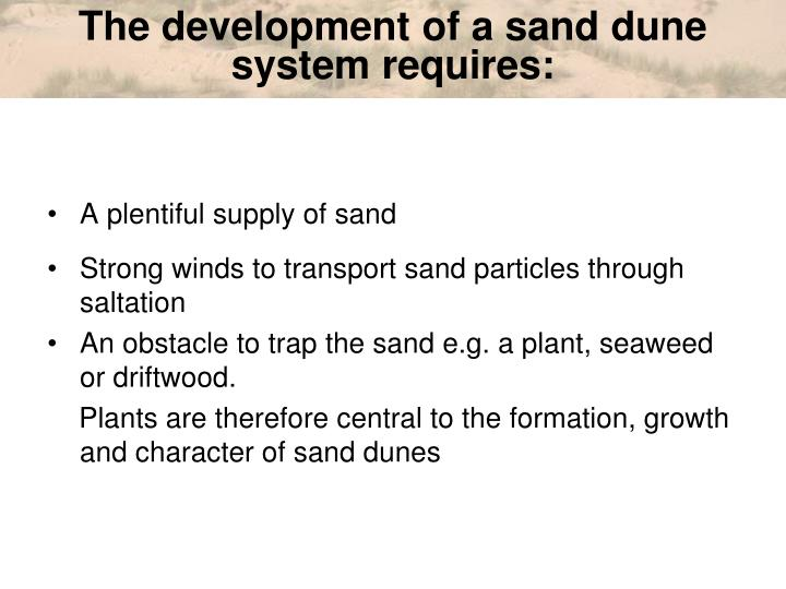 The development of a sand dune system requires: