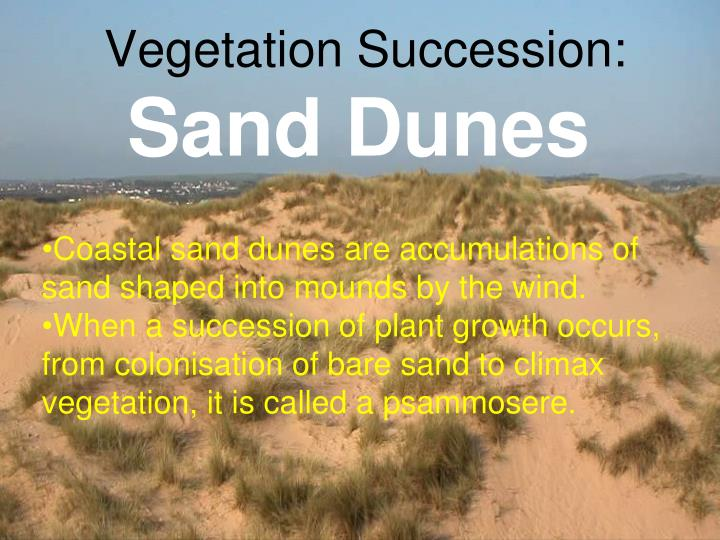 Vegetation succession sand dunes