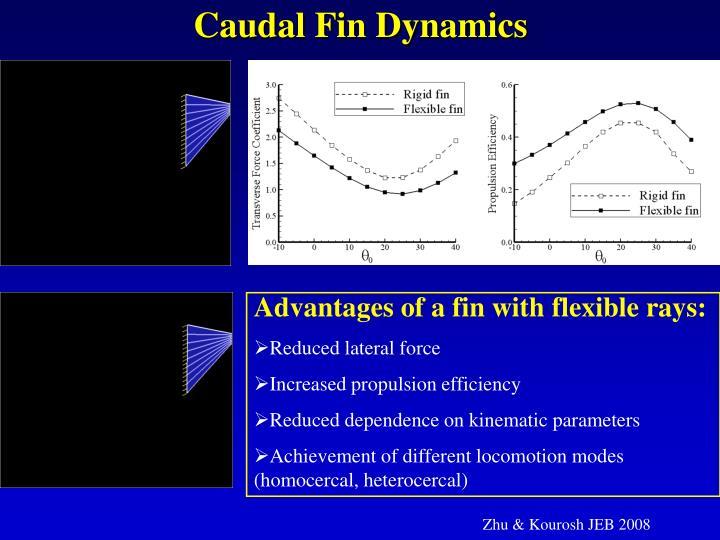 Caudal Fin Dynamics