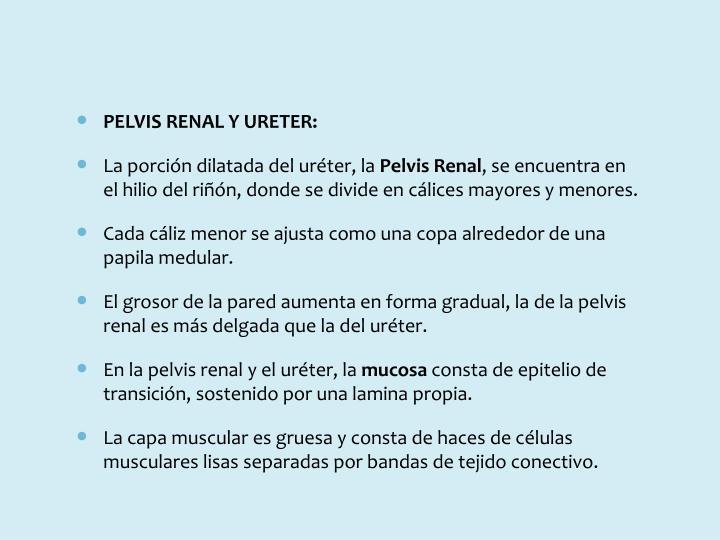 PELVIS RENAL Y URETER:
