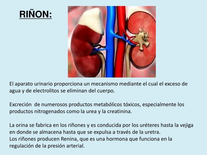 RIÑON: