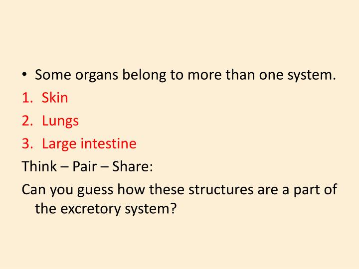 Some organs belong to more than one system.