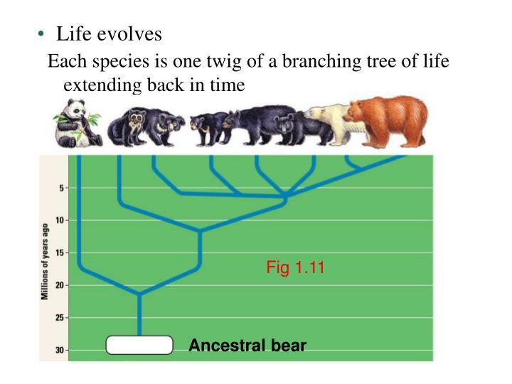 Life evolves