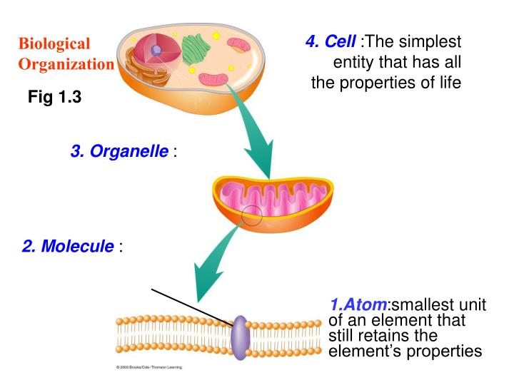4. Cell