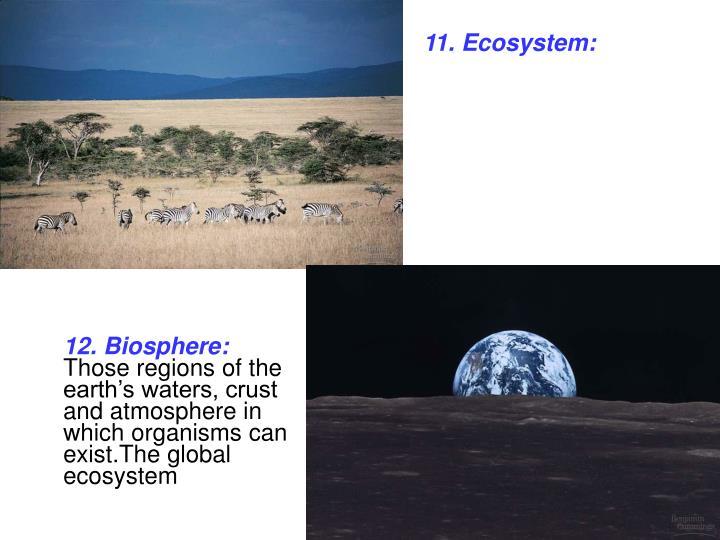 11. Ecosystem: