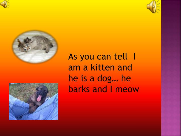 As you can tell  I am a kitten and he is a dog… he barks and I meow