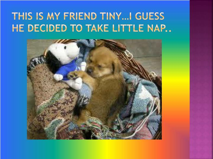 This is my friend tiny…I guess he decided to take little nap..