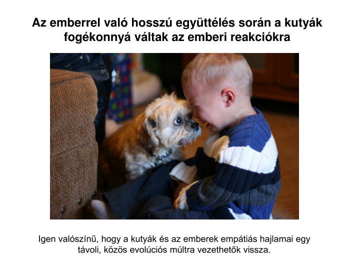 Az emberrel való hosszú együttélés során a kutyák fogékonnyá váltak az emberi reakciókra