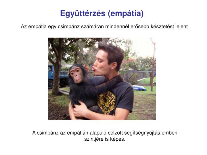 Együttérzés (empátia)