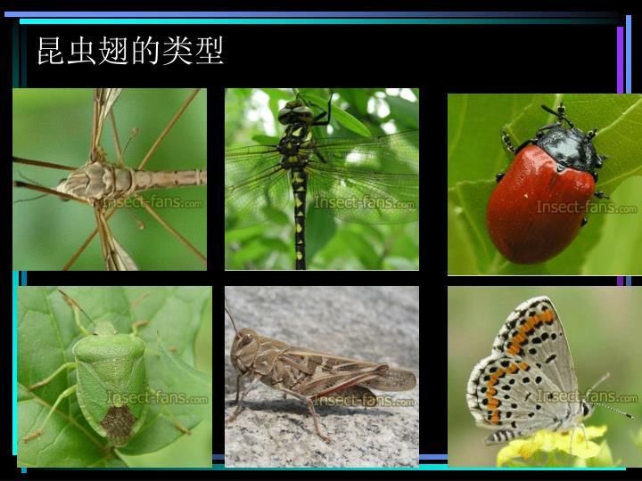 昆虫翅的类型