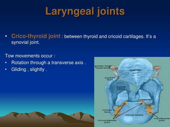 Laryngeal joints