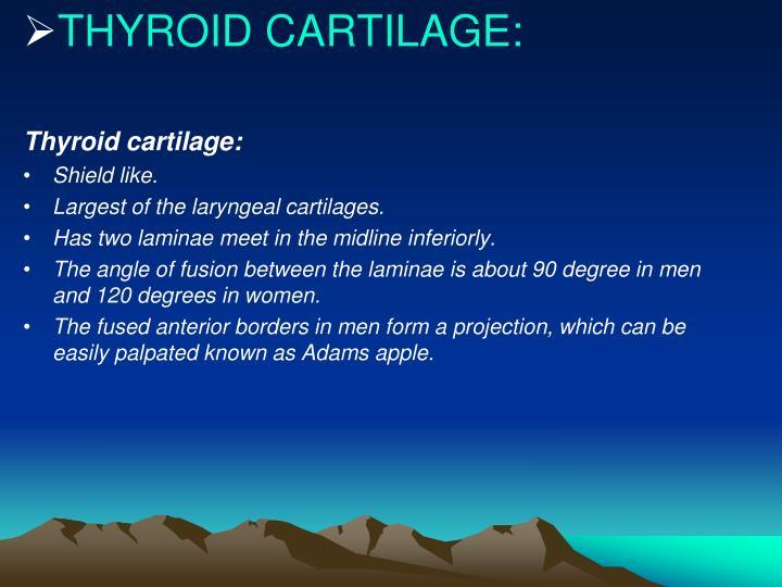 THYROID CARTILAGE: