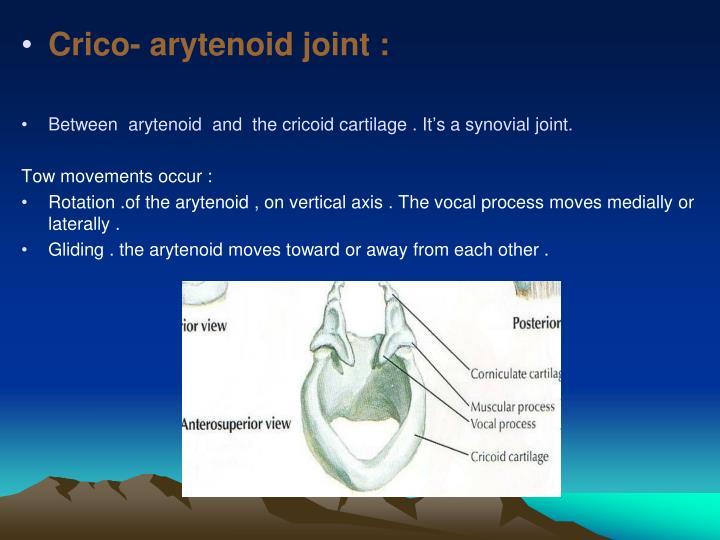 Crico- arytenoid joint :